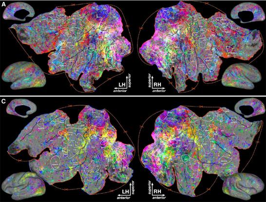 semantic-brain-map-gallant